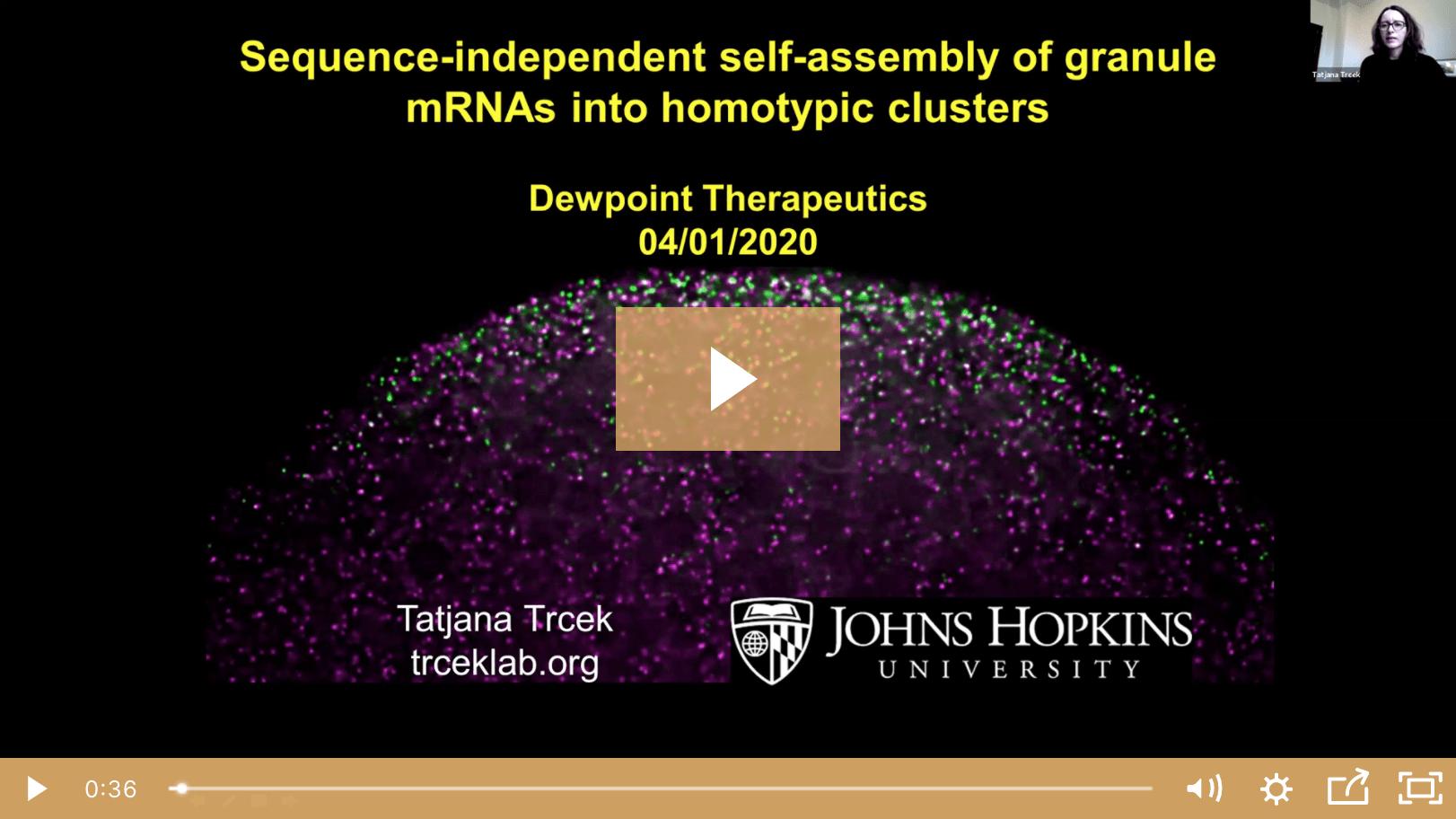 Tatjana Trcek on Germ Granule mRNA Self-Assemblys